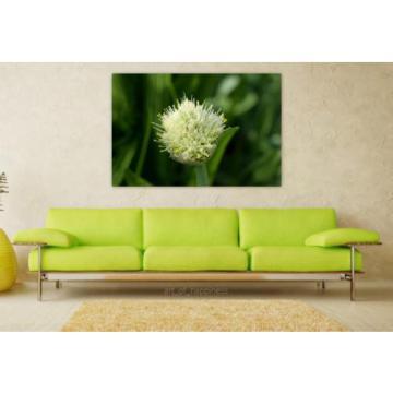 Stunning Poster Wall Art Decor Allium Flower Garlic 36x24 Inches