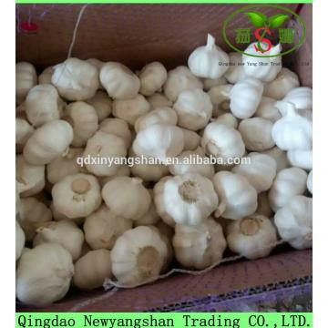 Professional 2017 year china new crop garlic Garlic  Exporter  In  China  Wholesale Chinese Garlic Packing In 10KG Boxes