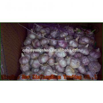 2017 2017 year china new crop garlic Chinese  Nature  Normal/Purple  Garlic  Price