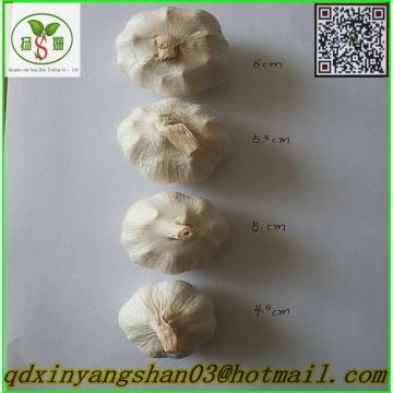 China's 2017 year china new crop garlic fresh  garlic  -  shandong