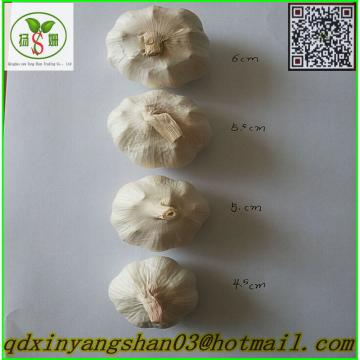 Price 2017 year china new crop garlic Of  Fresh  Chinese  Garlic  Specification 4.5cm 5.0 cm 5.5cm 6.0cm