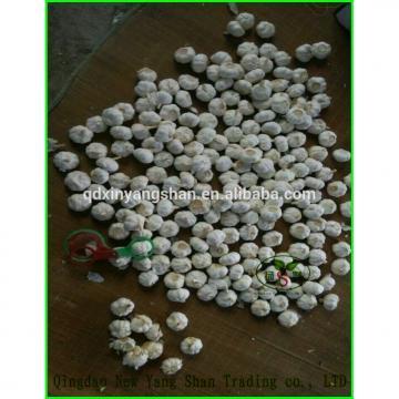 (HOT) 2017 year china new crop garlic GARLIC/FRESH  GARLIC  Size:  5.5  CM or more