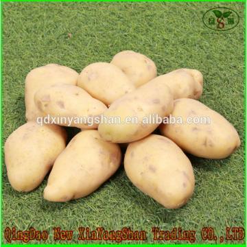 (HOT) 2017 year china new crop garlic FRESH  Garlic/CHINA  Purple  Garlic,good  faith wholesalers