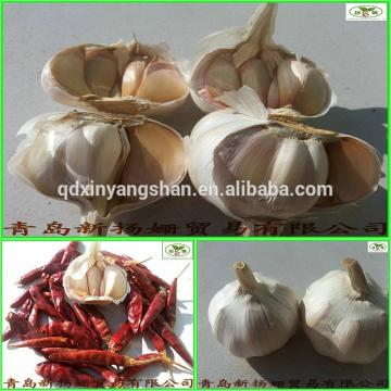 (HOT) 2017 year china new crop garlic Shandong  Purple  Garlic  Product  Exporte to Dubai 10kg/Carton