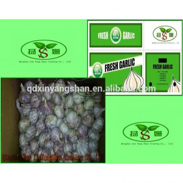 (HOT) 2017 year china new crop garlic Wholesale  fresh  purple  garlic  exporters in China