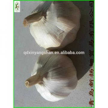 China 2017 year china new crop garlic is  best,  the  most  fresh White garlic,PURE GARLIC!