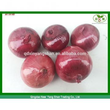 2014 2017 year china new crop garlic factory  hot  sale  fresh  garlic