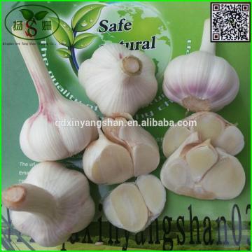 Shandong 2017 year china new crop garlic Garlic  Wholesale  Export  Price  2017