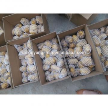Fresh 2017 year china new crop garlic Chinese  Garlic  Wholesale  Price