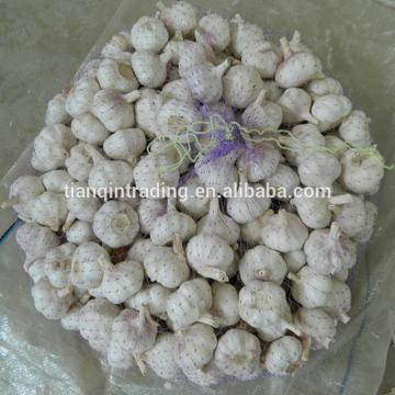 Normal 2017 year china new crop garlic white  garlic