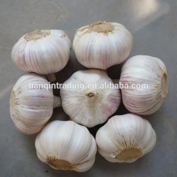 2017 2017 year china new crop garlic Chinese  Garlic  New  Crop