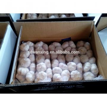 FRESH 2017 year china new crop garlic GARLIC