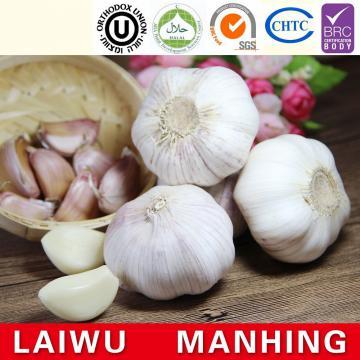 Organic 2017 year china new crop garlic normal  pure  white  fresh  garlic price