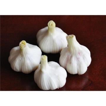 ISO 2017 year china new crop garlic 9001  fresh  white  garlic