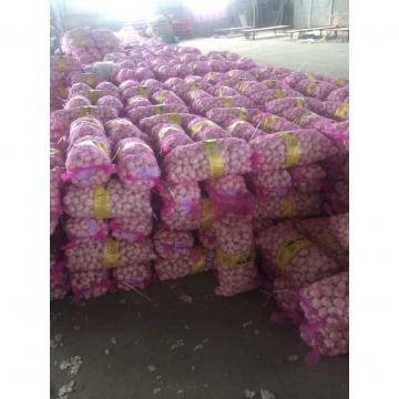 China 2017 year china new crop garlic Normal  white  fresh  garlic  for hot selling