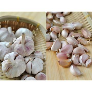 ISO 2017 year china new crop garlic Global  GAP  HACCP  KOSHER  JAS certification fresh garlic and ginger