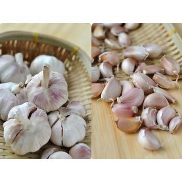 Wholesale 2017 year china new crop garlic Natural  white  fresh  garlic  with mesh bag or ctn