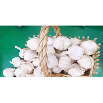 Wholesale 2017 year china new crop garlic 2017  normal  white  fresh  garlic with mesh bag or ctn