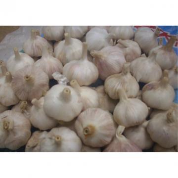 Hot 2017 year china new crop garlic sale  fresh  Chinese  normal  white garlic