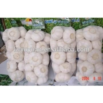 YUYUAN 2017 year china new crop garlic brand  hot  sail  fresh  garlic garlic oil extraction