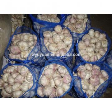 YUYUAN 2017 year china new crop garlic brand  hot  sail  fresh  garlic garlic netherlands
