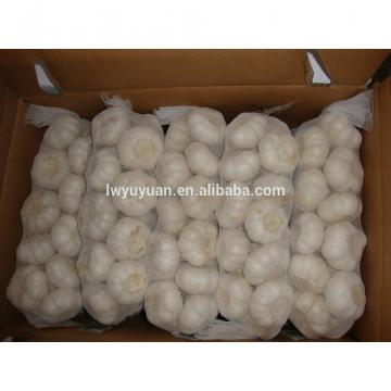 YUYUAN 2017 year china new crop garlic brand  hot  sail  fresh  garlic garlic in brine