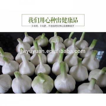 YUYUAN 2017 year china new crop garlic brand  hot  sail  fresh  garlic garlic in usa