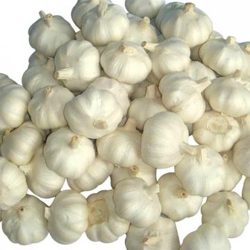 Alibaba 2017 year china new crop garlic high  quality  healthy  pure  white garlic with competitive price