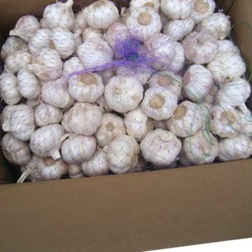Good 2017 year china new crop garlic quality  agricultural  product  snow  white garlic with low price