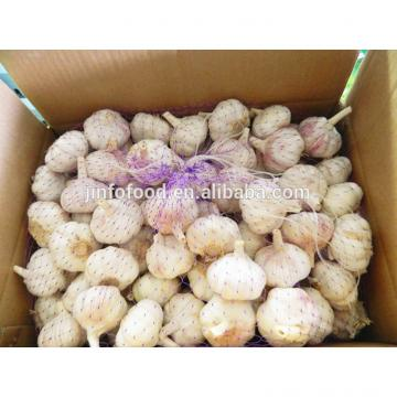 Fresh 2017 year china new crop garlic red  garlic