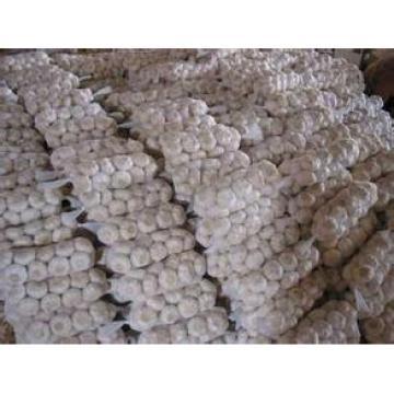 New 2017 year china new crop garlic Crop  5cm-6.5cm  20kg  mesh  bag pure white and normal white fresh garlic