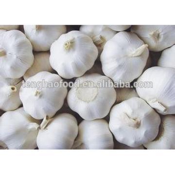 2014 2017 year china new crop garlic new  crop  ,  mesh  bag ,pure white garlic
