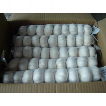fresh 2017 year china new crop garlic white  garlic