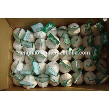 Chinese 2017 year china new crop garlic 2017  new  crop  garlic  (4.5cm 5.0cm 5.5cm 6.0cm) normal/pure white garlic,mesh bag or carton packing