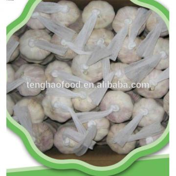 good 2017 year china new crop garlic quality  Chinese  fresh  garlic  for hot sales 4.5cm 5.0cm 5.5cm 6.0cm