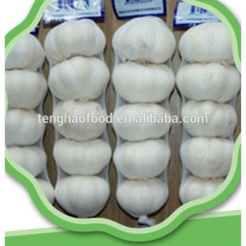 New 2017 year china new crop garlic crop  best  quality  fresh  garlic from China