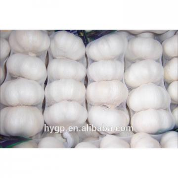 Fresh Pure White Galic cheap price