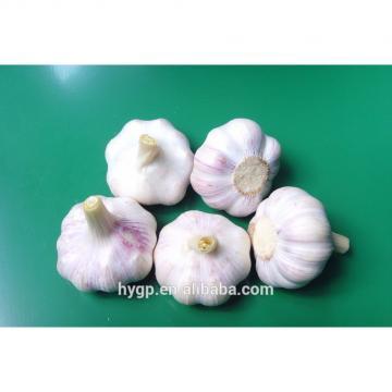 farm red fresh garlic china galic supplier for wholesales