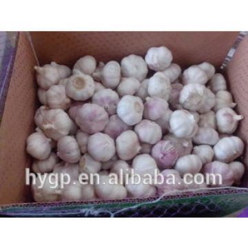 China fresh purple garlic 2017