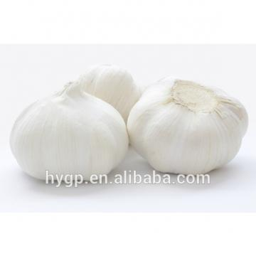 China Fresh pure white galic size 5.0-6.5