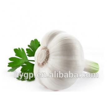 Fresh white galic china price in wholesle
