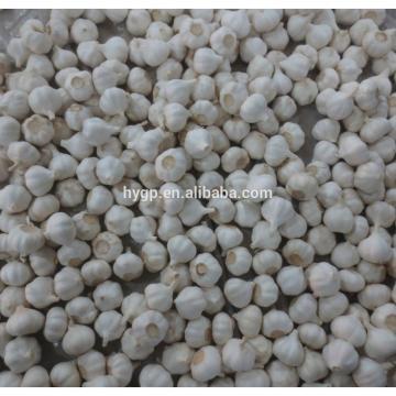 White&Normal White Fresh Garlic