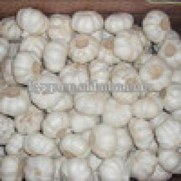 High Quality Bulk Garlic For Sale for all size