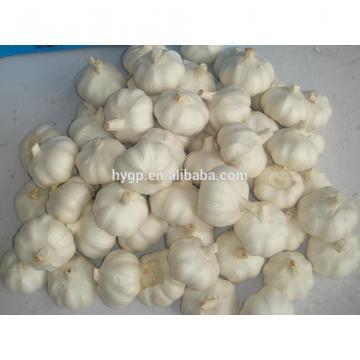 bulgaria garlic