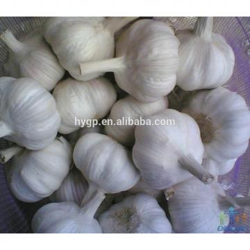 China Big Size Garlic For Sale