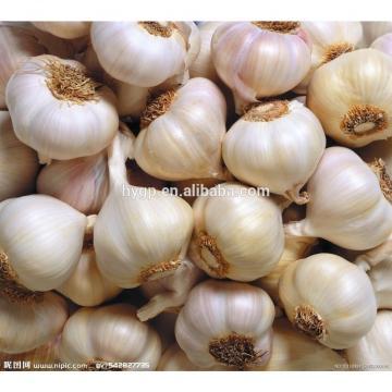 ian garlic