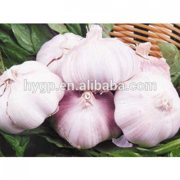 High Quality Garlic