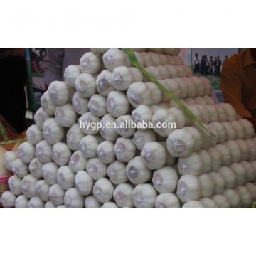 Big And Full Size Shandong China Fresh Galic