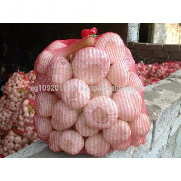 white garlic from egypt