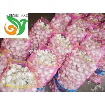 Fresh Garlic in Low Price